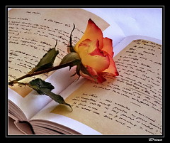 57-dsir d'crire !... (gio.dino3) Tags: rose album rosa libro livre albo giodino