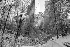 New York City Winters (Marcela Aguerre) Tags: park city nyc newyorkcity parque trees winter urban blackandwhite bw naturaleza snow newyork blancoynegro nature buildings bench blackwhite edificios nikon noiretblanc path centralpark manhattan nieve central bn urbana invierno parkbench centralparksouth citylandscape sanctuary biancoenero snowcovered urbanlandscape nuevayork blancetnoir thepond hallett citynature natureblackwhite cityinwinter nikond3300 hallettnaturesanctuary d3300