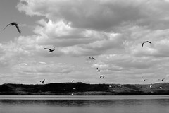 Day Two Hundred Ten (fotoJared) Tags: city blackandwhite seagulls lake monochrome birds river mississippi landscape nikon may 365 mn minneosta 365project fotojared