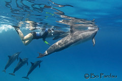Dolphin time (bodiver) Tags: ocean blue reflection hawaii outdoor dolphin ambientlight wideangle freediving dolphins fins naia kailua