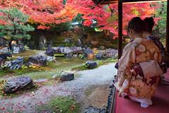 Kodai-ji 7550 (kbaranowski) Tags: japan kyoto fallfoliage japanesemaple nippon kimono kouyou japaneseculture touristattraction nihon kodaiji famousplace entokuin touristdestination krzysztofbaranowski 2016krzysztofbaranowski