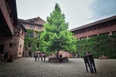 Green Flame (StefanJurcaRomania) Tags: tree green germany bayern deutschland nuremberg franken baum hof burg nrnberg hofburg