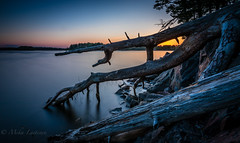 Deadwood #2 (Mika Laitinen) Tags: ocean longexposure sea sky seascape nature water rock finland landscape helsinki europe outdoor wideangle calm shore serene fi helsingfors scandinavia vuosaari uusimaa leefilters tokina1116mm leebigstopper canon7dmarkii