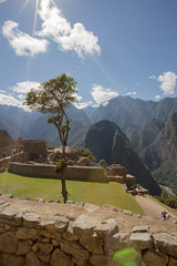 A tree at Machu Picchu (kenneth_hawthorn) Tags: tree machu picchu