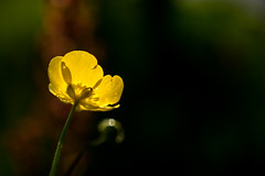 Viewfinder-18 (sven.vansantvliet) Tags: blue shadow sky flower colors yellow fleurs jaune garden drops weide couleurs tuin schaduw geel bloem druppel tulp kleuren tullip paardebloem boterbloem pisbloem lentebloesembloemenbijhuis