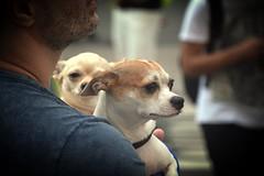 Puppies (Billy W Martins ) Tags: man cute dogs beard puppies nikon sweet sopaulo pride d7100 pride2016