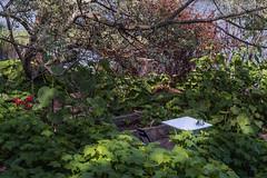 Open Air Cafe (pni) Tags: plant tree water caf suomi finland table leaf chair branch foliage helsingfors ashtray lush tlnlahti kahvila skrubu pni tyyni tlviken pekkanikrus