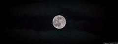 20160620 70D Strawberry Full Moon 32-HDR (James Scott S) Tags: palmbeach florida unitedstates us summer solstice full moon strawberry 1967 canon 70d sigma 150600 lrcc lunar luna