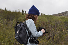 DSC_0732 (David.Sankey) Tags: alaska alaskarange mountains mountainrange denali denalinationalpark hiking nature park nationalparkdenalinationalparkandpreserve mckinley travel fog rivers savageriver savagealpinetrail trial savagealpine
