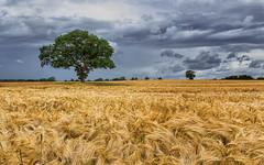 Windy summer day (Stefan Sellmer) Tags: summer tree clouds germany de landscape deutschland cloudy outdoor schleswigholstein strande bülk