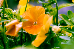 _DSF7069 (ad_n61) Tags: espaa flores primavera bar zaragoza silla fujifilm junio fujinon wr ebc kiosko xf 2016 ois 13556 xt1 18135mm
