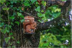 """Ecureuil du jardin """"2016"""" (Christian Labeaune) Tags: 2016 ecureuil faune poils chatillonsurseine21400 bourgognectedor france christianlabeaune chtillonnais jardin cureuil"""