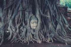 Phra Nakhon Si Ayutthaya (ReinierVanOorsouw) Tags: travel sony sonya7r2 a7rii travelling bbm reiniervanoorsouw reizen opreis thailand thai siam ayutthaya ayuthaya thajsko asia asya azi  tailandia thaimaa  photography  thalande   experience vacation tayland   new travels travellingasia inasia