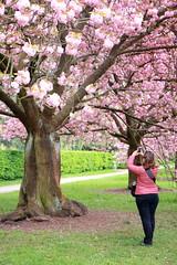 IMG_4591 (Irina Souiki) Tags: parcdesceaux france paris sceaux flowers nature parc park