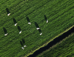 Ransdorp (5) (de kist) Tags: kap thenetherlands ransdorp waterland schapen grazendeschapen grazingsheep aerial