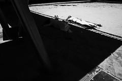 Untitled (nzkphotography) Tags: barcelona street travel summer people blackandwhite beach monochrome noiretblanc 28mm streetphotography highcontrast espana catalunya ricohgr 2016 seriouscompacts
