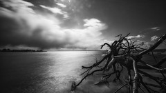 Driftwood (James Loesch) Tags: longexposure blackandwhite d800 seasidepark barnegatbay hurricanesandy