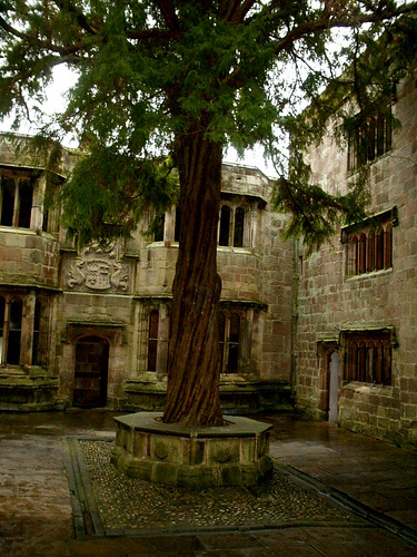 Venerable tree in castle courtyard