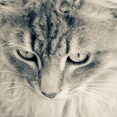_DSC0022.jpg (kensol72) Tags: portrait nikon feline pussy nikkor dx 18105mm d5100