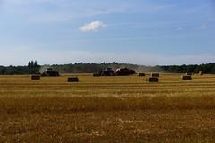 Harvest (osto) Tags: field denmark oak europa europe sony harvest straw zealand hay agriculture scandinavia bale danmark slt a77 sjlland  osto alpha77 osto august2013