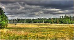 Fall_Soon-Q1308yl (Guyser1) Tags: canon landscape eos scenic yellowstonenationalpark yellowstone hdr yellowstonepark 40d eos40d