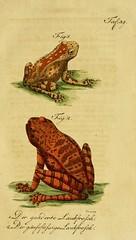 n458_w1150 (BioDivLibrary) Tags: amphibians reptiles harvarduniversitymczernstmayrlibrary bhl:page=4073249 dc:identifier=httpbiodiversitylibraryorgpage4073249
