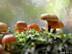(Sarah-Vie) Tags: dsc champignon 0025
