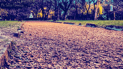 Buscando un nuevo camino (Sebas Fonseca) Tags: parque argentina project nikon 365 hdr proyecto parqueavellaneda d7000 phsebafonseca