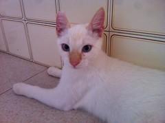 Sabio 16 (Asociacin Defensa Felina de Sevilla) Tags: espaa sevilla gatos felinos animales gatitos adoptar protectora adopciones apadrinar gatosurbanos defensafelina asociacindeanimales coloniasdegatos proteccindegatos activismoporlosanimales