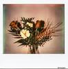 Blumenstrauss - Polaroid_Image_Format- November 2013 (irisisopen ☼f/8☀︎∑≦light) Tags: camera film analog polaroid image motive spectra farbe kamera impossible instantfilm kameras