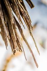 Broken Limb - Final, 9/12, Winter's Hidden Beauty (molliebimages) Tags: winter tree lines jagged minimalism