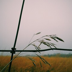 field grass fence gloomy michigan unitedstatesofamerica... (Photo: bill.d on Flickr)