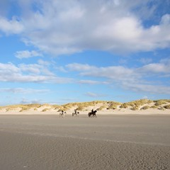Vivre libre *-*** (Titole) Tags: sky horses beach clouds sand dune squareformat thumbsup explored favescontestwinner friendlychallenges storybookwinner titole nicolefaton
