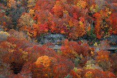 ! Drv!!  ~Lake Towada Hakkatoge~ (PS~~) Tags: travel cruise autumn trees light cliff lake fern green nature leaves yellow forest canon gold reflecting maple colorful stream exposure gallery natural scenic cliffs hues aomori bleak  akita beech  towada aesthetic deadtrees  pleasureboat landscapephotography  snakewood          forestbath  atmosphere towadanationalpark
