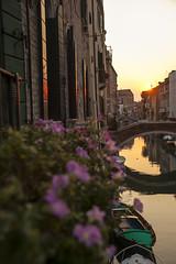 IMG_3714 (SamSeguso) Tags: bridge flowers venice light sunset italy orange sun reflection water boat reflex violet dreams venise balconi sunsetinvenice