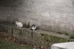 Cami ve Kediler Hep Beraber