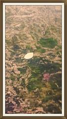platform (Guy Bendle) Tags: world family trees sky music love nature animals clouds power friendship god spirit earth glory islam jesus joy mother deep fraternity mohammed soul masters wisdom krishna brotherhood shivas tao ching consciousness tesla vibration frequency bhudda lobe deepjoy oneconsciousness beingsupernature