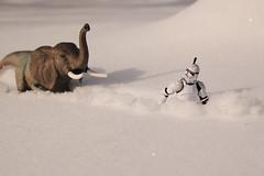 Run away! (radargeek) Tags: rudydean erex clonetrooper starwars ok mustang oklahoma snow trex