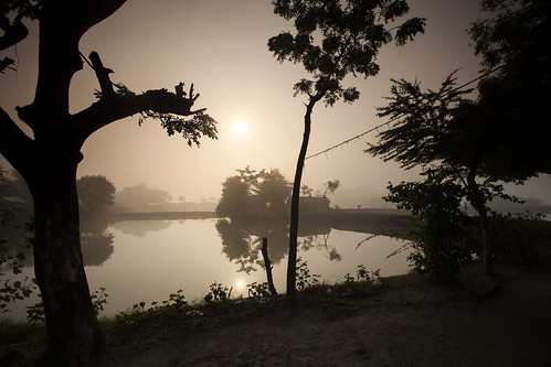 Misty morning from Meghla's front yard in Khulna, Bangladesh. Photo by Felix Clay/Duckrabbit.