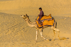 Decorated (DhruvDave) Tags: canon desert camel jaisalmer thar rajasthan decorated 550d t2i