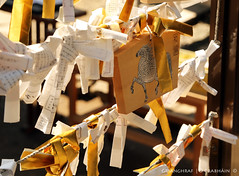 Shiba Koen 2014-02-22 (9O6A5396) (Wonder Westie) Tags: japan canon tokyo canoneos shibakoen canoneos5dmarkiii sencrabhin crabhin