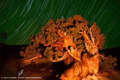 Stargazing (Jason Allen Photography) Tags: longexposure lightpainting night nationalpark yosemite yosemitenationalpark startrails