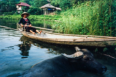 (JC.Murphy) Tags: travel woman pet lake film water animal zeiss rural river reeds cow boat highlands buffalo asia fuji tour village farm rangefinder slide ox vietnam motorbike positive skiff ikon provia homestay 400x