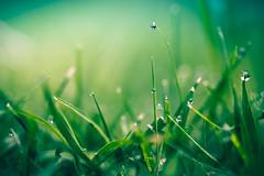 Just A Little Drop (Elizabeth_211) Tags: macro green grass drops tennessee dew jacksontn westtn sliderssunday greenfireinthesky sherielizabeth