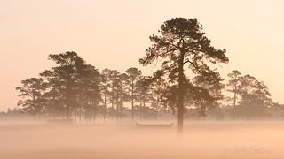 Springdale Morning