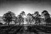 Another New Day (Kev Palmer) Tags: trees light england tree monochrome sunrise blackwhite spring nikon shadows estate shade april stokeontrent wedgwood gbr barlaston benbo leefilters nikkor2470f28 benbotripod leendgrad d800e nikond800e
