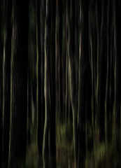 "abstracted forest • <a style=""font-size:0.8em;"" href=""http://www.flickr.com/photos/44919156@N00/14073426175/"" target=""_blank"">View on Flickr</a>"