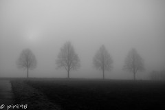 4 trees in the fog (piri198) Tags: trees bw white black monochrome fog germany four nebel 4 foggy samsung bäume vier lightroom silhuette nx 927mm nxmini
