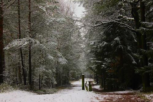 "Im Winterwald (mit Schnee) 2015 • <a style=""font-size:0.8em;"" href=""http://www.flickr.com/photos/69570948@N04/16250648579/"" target=""_blank"">View on Flickr</a>"