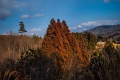PhoTones Works #6402 (TAKUMA KIMURA) Tags: wood winter mountain mountains tree japan landscape scenery natural hut 日本 木 自然 plain 山 冬 風景 平原 kimura rd1 景色 樹 takuma 琢磨 小屋 木村 山脈 photones
